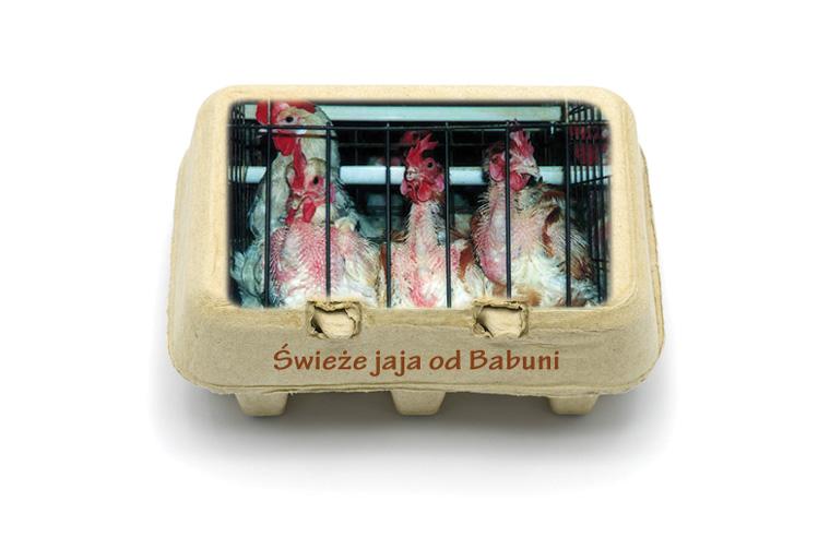 swieze-jaja-babuni